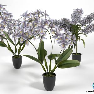 Orquídeas 25