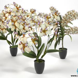 Orquídeas 30