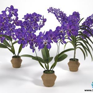 Orquídeas 12