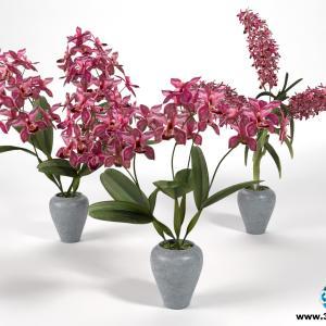 Orquídeas 16