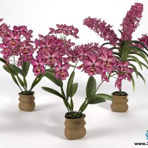 Orquídeas 15