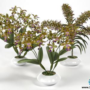 Orquídeas 27