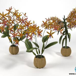 Orquídeas 8