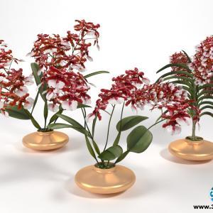 Orquídeas 29