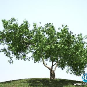 Árvore Escultural01