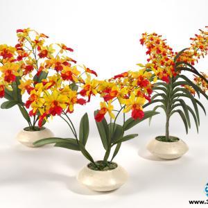 Orquídeas 17