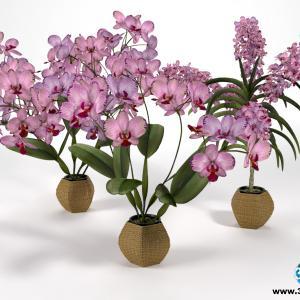 Orquídeas 5