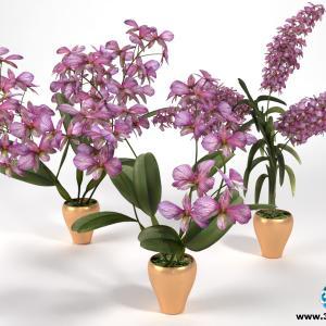 Orquídeas 28