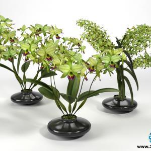 Orquídeas 24