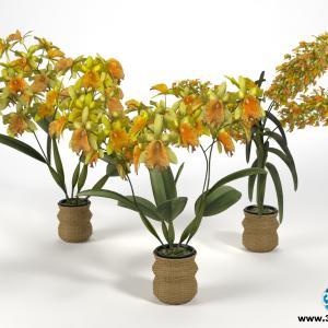Orquídeas 14