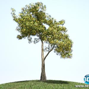 Árvore Escultural 02