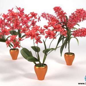 Orquídeas 18