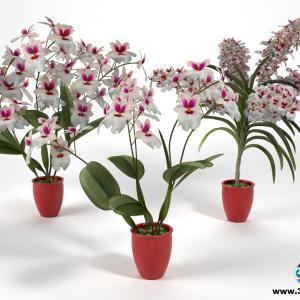 Orquídeas 20