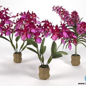 Orquídeas 11