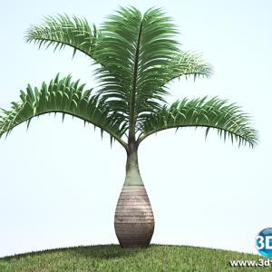 Palmeira Garrafa Hyophorbe Lagenicauli