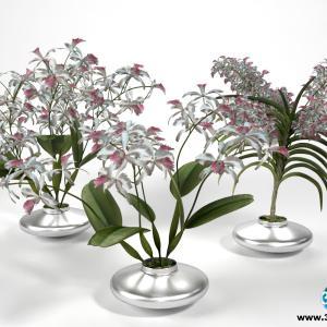Orquídeas 19