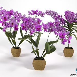 Orquideas 6