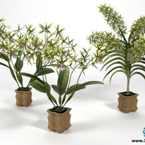 Orquídeas 9