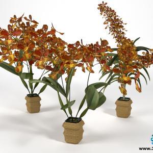 Orquídeas 10