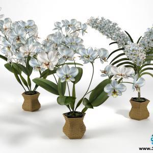 Orquídeas 7