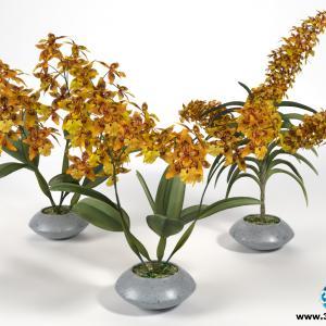Orquídeas 22
