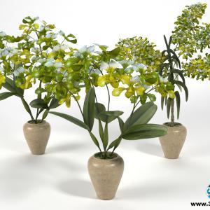 Orquídeas 21