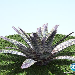 Vriesea Fosteriana Rubra