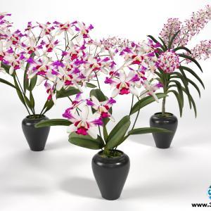 Orquídeas 26