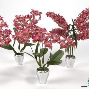 Orquídeas 23