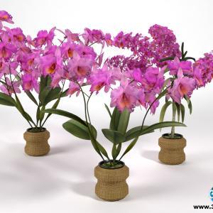 Orquídeas 13
