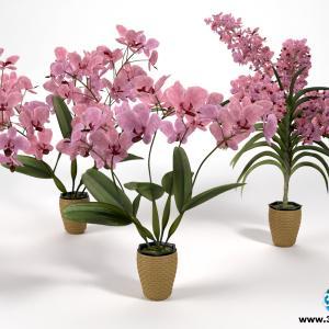 Orquídeas 3